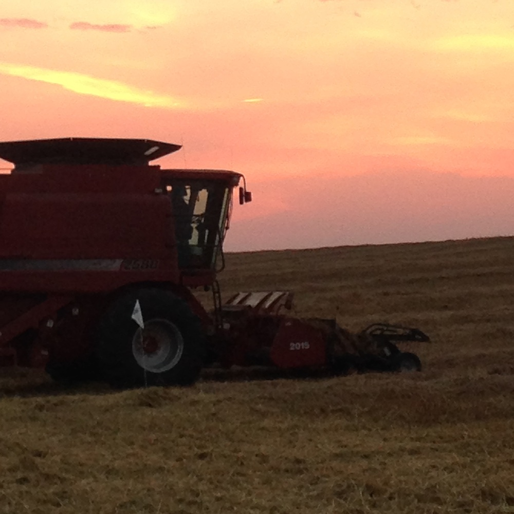 Harvesting Foliar Barley trials in the autumn sunset!